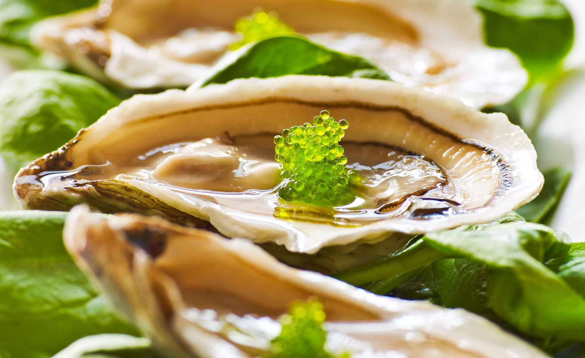 oysters_green_caviar